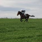 人生を成功させるために乗る、12頭の速い馬