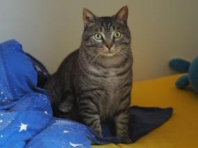 cat-1219742_640.jpg