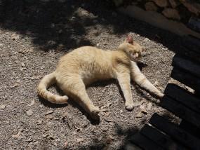 cat-653889_640.jpg