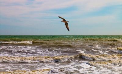 bird-1191712_640.jpg