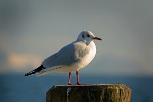 seagull-654037_640.jpg