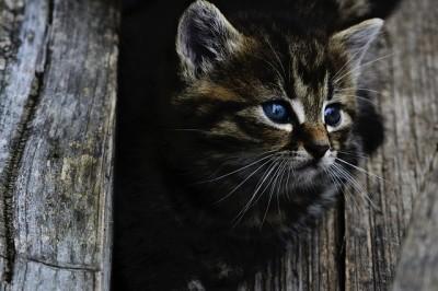 cat-914110_640.jpg