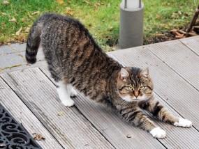 cat-215294_640.jpg
