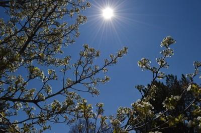 spring-1409373_640.jpg
