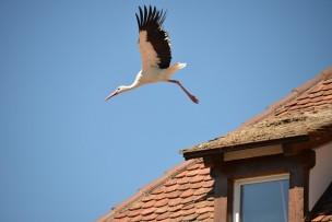 stork-447551_640.jpg