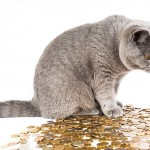 なぜ金運を上げるために、お金に感謝のエネルギーを乗せるのか