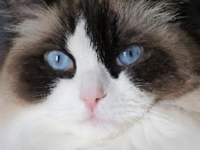 cat-2188612_640.jpg