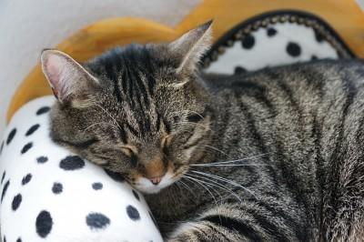 cat-2360874_640.jpg